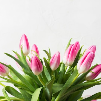 Bouquet of pink tulips on a white stone wall background. concept of the holiday and the beginning of spring.