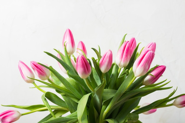 Bouquet of pink tulips on a white stone wall. concept of the holiday and the beginning of spring.