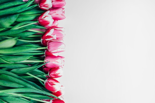 Bouquet of pink tulips on a white surface