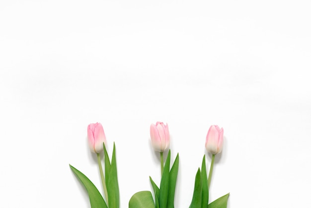 A bouquet of pink tulips