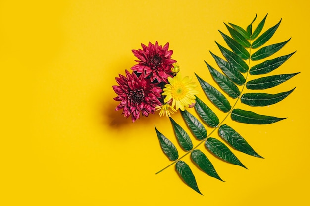 Bouquet of pink and yellow gerbera flowers and a branch with green leaves on a yellow background