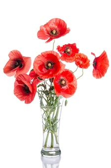 Bouquet of poppies in glass vase isolated