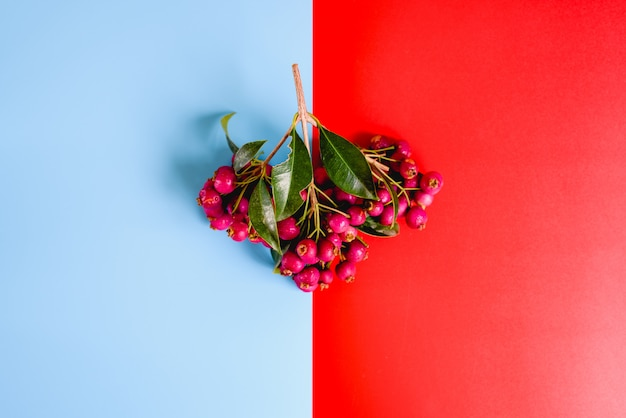 Bouquet of purple autumnal fruits isolated on a red and blue background.