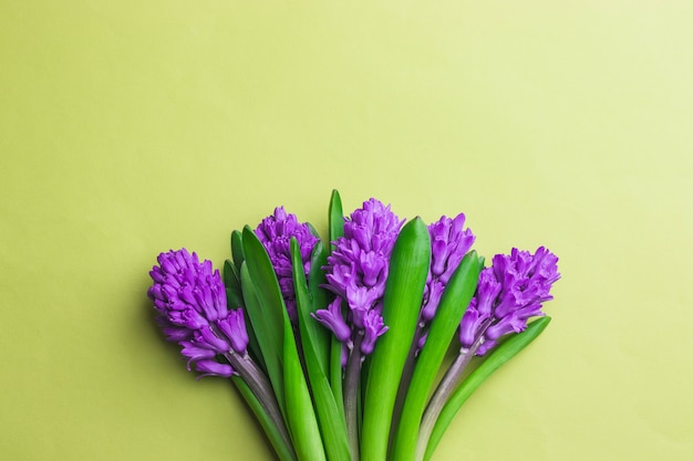 Bouquet of purple hyacinth on yellow background