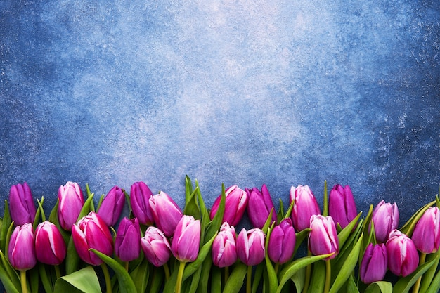 Bouquet of purple tulips on a blue wall. flat lay, copy space for text