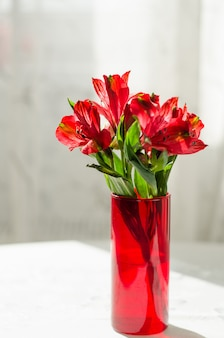 Bouquet of red alstroemeria in vase on white table