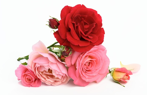 Bouquet of red and pink roses on white background, festive bouquet, close up