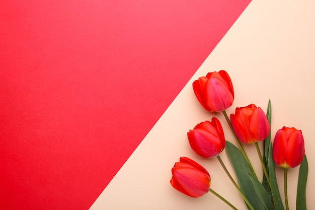 Bouquet of red tulips on colorful background