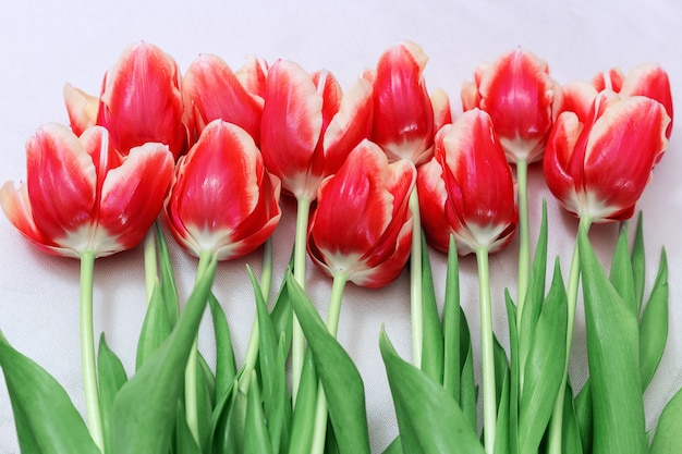Bouquet of red tulips lying on a light. top view. horizontal format. cut beautiful flowers. spring floral.