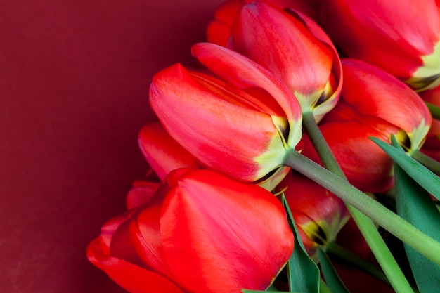 A bouquet of red tulips in the spring season