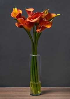 Bouquet of red and yellow calla lilies in a vase on the table on dark background.