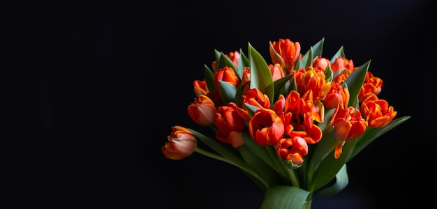 Bouquet of red-yellow tulips on a black wall. copy space for text, flat lay. banner. close-up.