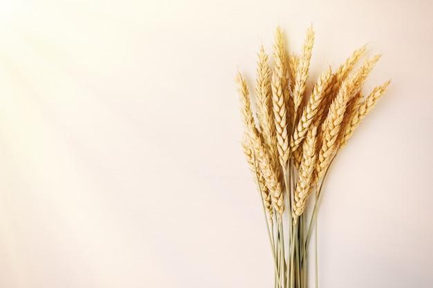 Bouquet of ripe ears of wheat