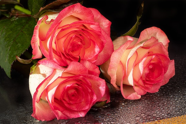 A bouquet of roses for the holiday. women's day, valentine's day, name day. on a dark background with reflection. copy space