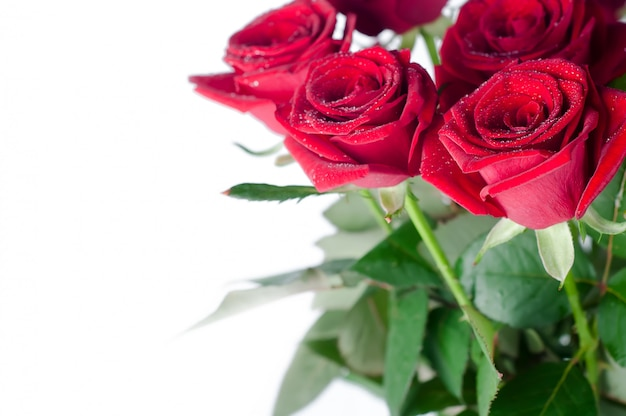 Bouquet of roses on a white background