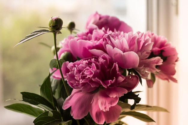 A bouquet of soft pink peony on a light blurred background