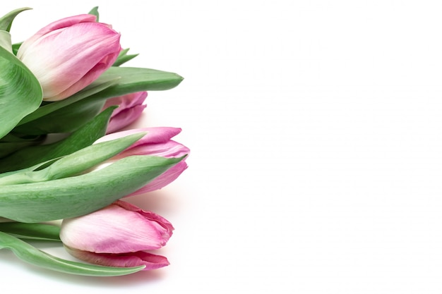Bouquet of spring flowers, pink tulips on white background, copy space