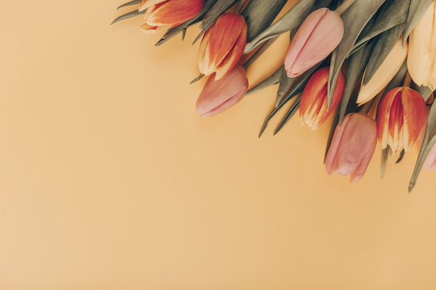 Bouquet of tulips on an orange background. flat lay, top view with copyspace.
