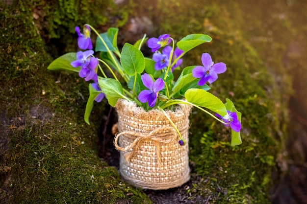 Bouquet of violets in the forest on the background of a tree