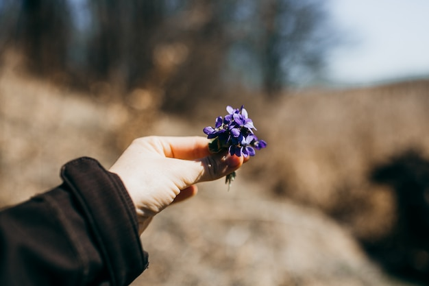 Bouquet of violets in woman hand.