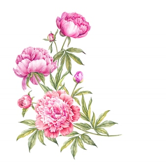 Bouquet of watercolor pink peonies.