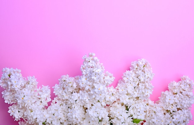Bouquet of white blossoming lilacs on a pink background