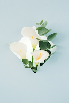 Bouquet of white callas and eucalyptus in  frame on blue