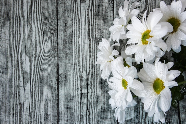 A bouquet of white chrysanthemums in water drops close up on a wooden background