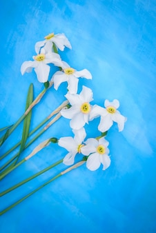 A bouquet of white daffodils on a blue surface