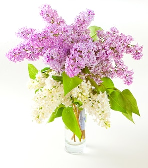Bouquet of white and purple lilac flowers in a glass vase on a white background