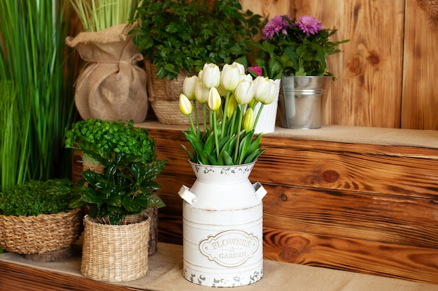 Bouquet white tulips flowers in a basket. interior of spring yard. rustic terrace. closeup of flower pots with plants. young plants growing in garden. spring decoration, tulips in basket. coffee plant