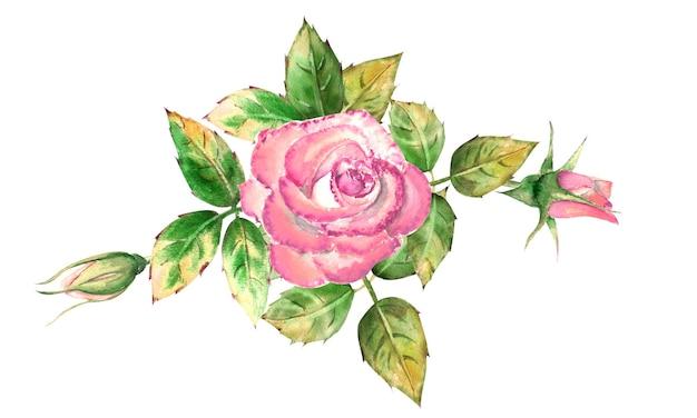 ピンクのバラの花、緑の葉、開いた花と閉じた花の花束