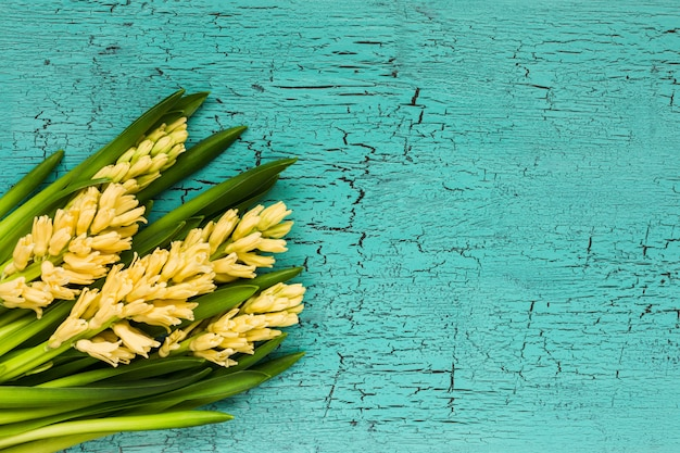 Bouquet of yellow hyacinths on  blue background. top view, copy space