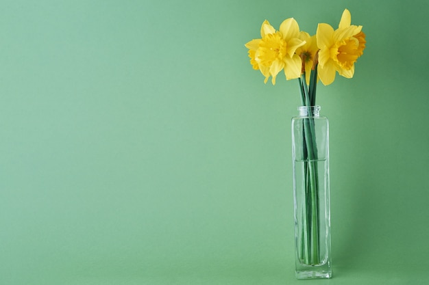 Bouquet of yellow narcissus flowers in glass vase on green background with copy space