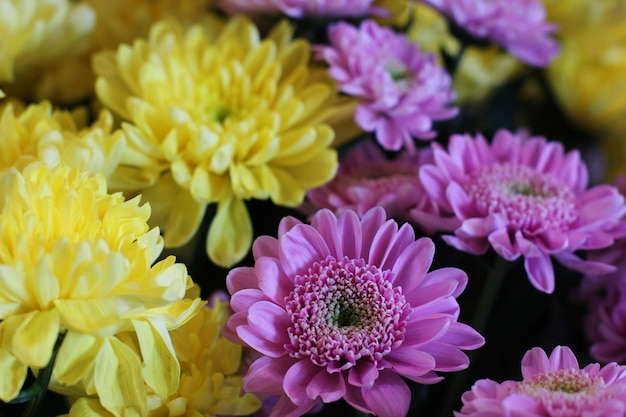 Bouquet of yellow and purple chrysanthemums. macro photography