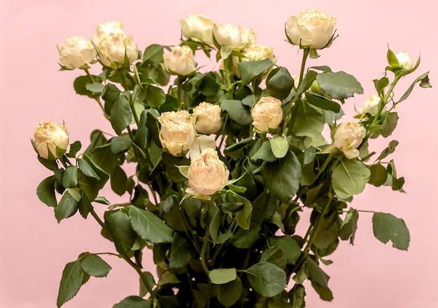 Bouquet of yellow roses. on a pink