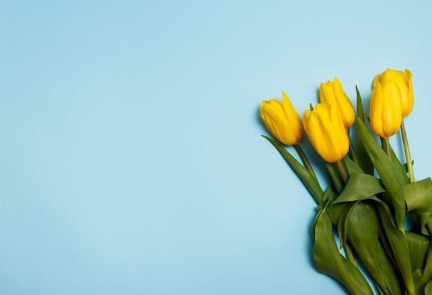 Bouquet of yellow tulips on a blue background