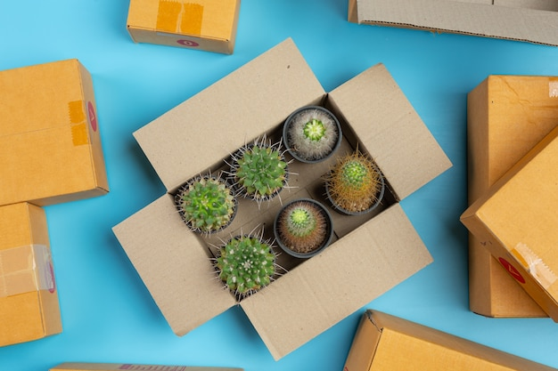 Box with cactus blue surface.