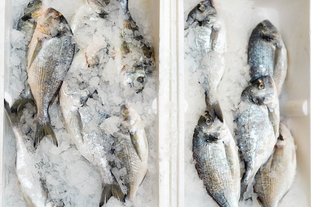 Box with frozen fish on ice in food store