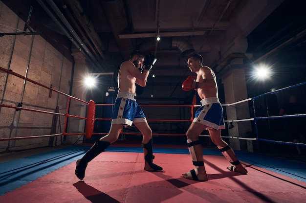 Boxers training kickboxing in the ring