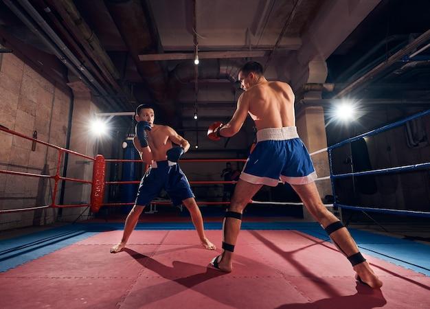 Boxers training kickboxing