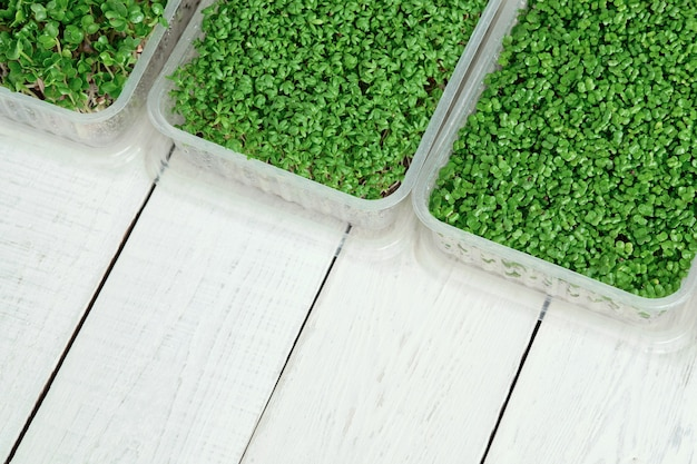Boxes with microgreens of watercress, radish and broccoli on white table. concept of healthy lifestyle and home gardening