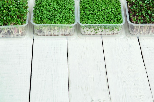 Boxes with microgreens of watercress, radish and broccoli on white table
