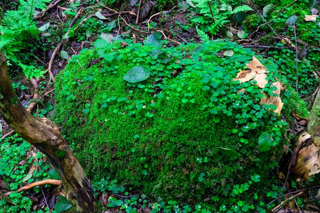 Самшитовый лес. ризе - турция