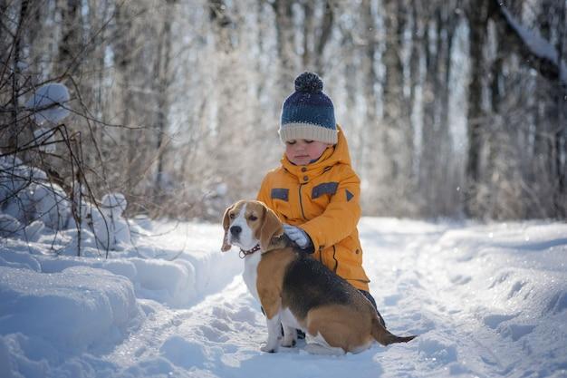 凍るような晴れた日に冬の雪に覆われた森を歩いて遊んでいる少年とビーグル犬