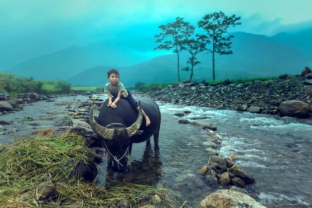 The boy are riding a buffalo.