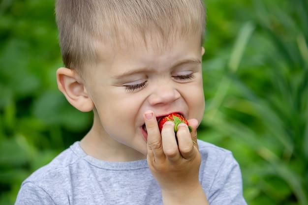 Мальчик ест вкусную клубнику. на ферме. природа. выборочный фокус.