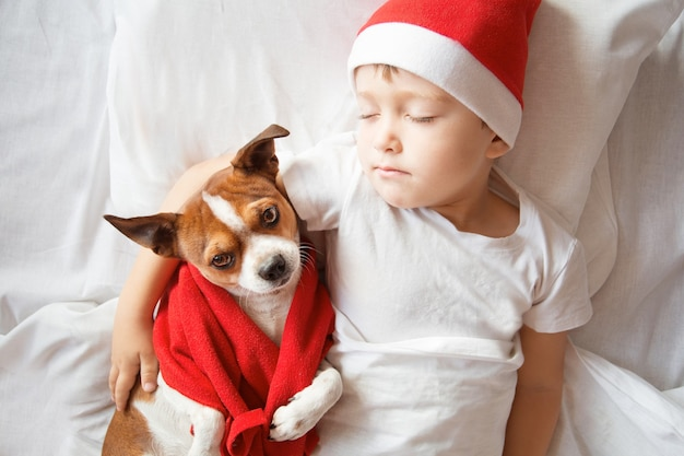 Мальчик в новогодней шапке с маленькой собачкой в красном шарфе спит в постели. фото высокого качества