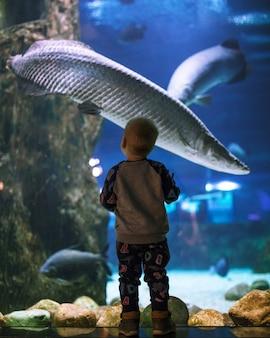 A boy looks at a large fish in an aquarium seaquarium