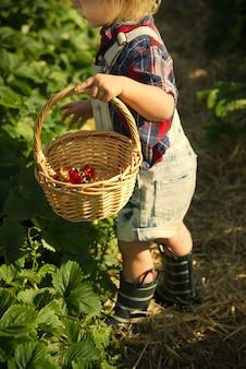 フィールドでイチゴを拾う少年